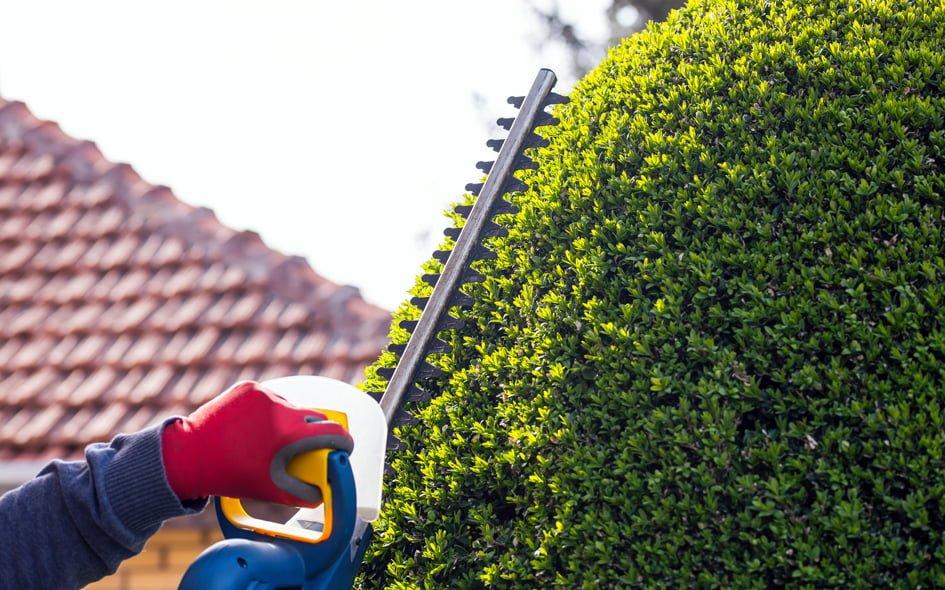 trim-hedge